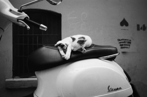 The most hipster shot ever: a black-and-white film shot from an old camera of a cat sleeping on a Vespa with graffiti in the background in a Bohemian district (Galata) of Istanbul